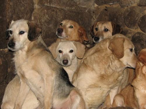 URGENTISSIME SVP !!!!! 11 chiens enfermés dans une cave (07) ardèche Chiens13