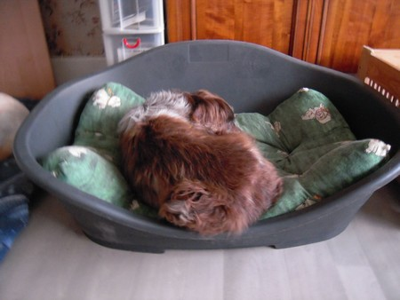 JASMIN et les paniers (8 juillet 2010) Jasmin20