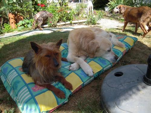 ROSE et VALENTIN (10 juillet 2010) Rose-v10