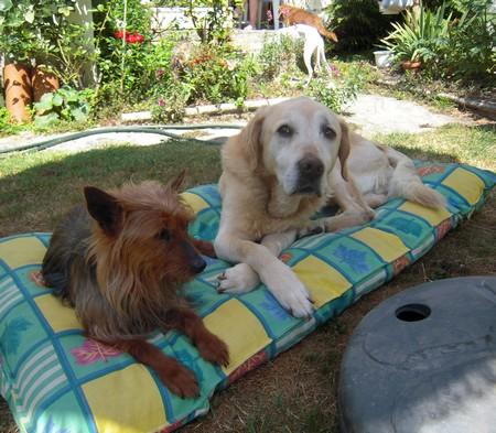ROSE et VALENTIN (10 juillet 2010) Rose-v12