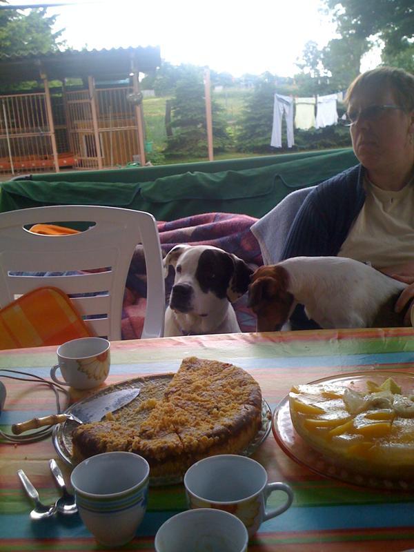 Covoiturage de 4 chiens (28 mai 2010) - Page 2 Suri_h10
