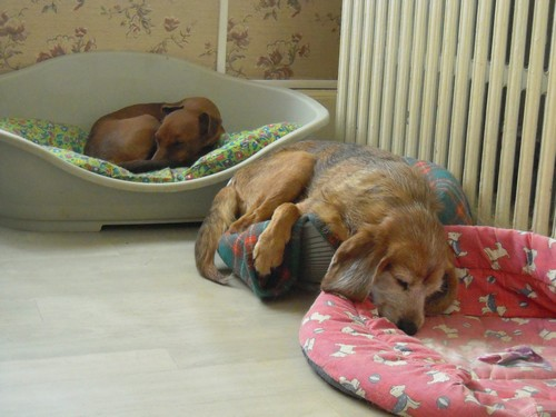 Déprimé ou endormi ? (29 juillet 2010) Tobby-21