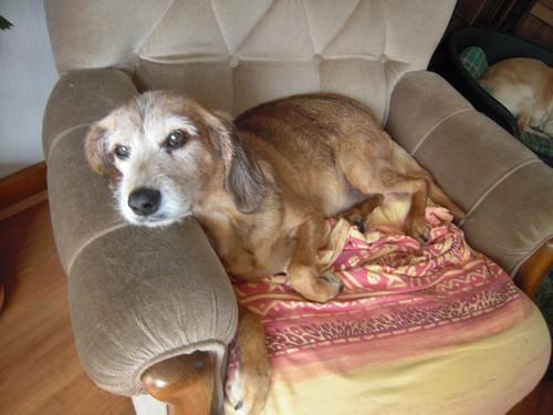 Visite vétérinaire (1er septembre 2010) Tobby-25