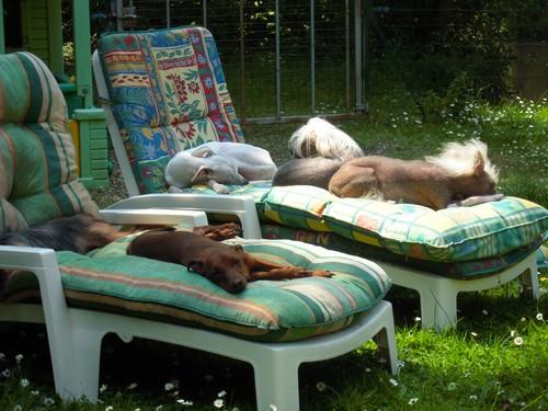 Confort d'été (27 juin 2010) Tous-t11