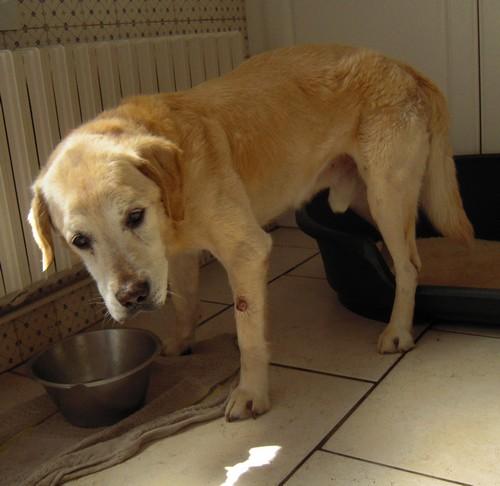 Son histoire (29 juin 2010) Val-bo10