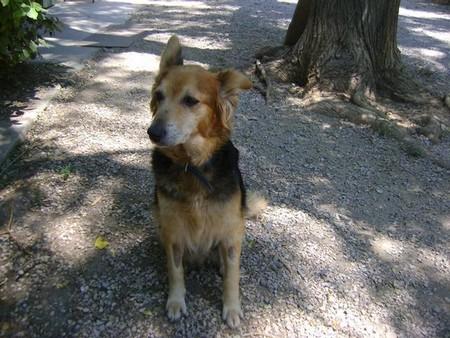 """Une pauvre chienne arrivée au refuge """"bouffée"""" par les asticots!!!! - Page 2 Victoi10"""