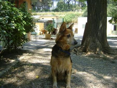 """Une pauvre chienne arrivée au refuge """"bouffée"""" par les asticots!!!! - Page 2 Victoi11"""