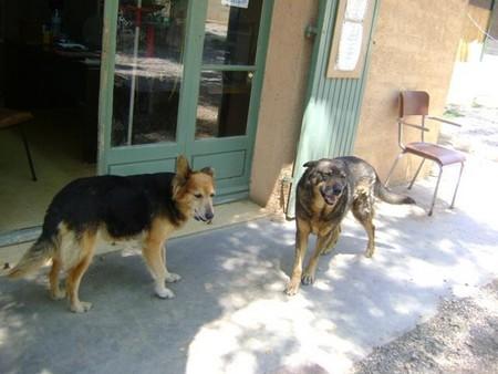 """Une pauvre chienne arrivée au refuge """"bouffée"""" par les asticots!!!! - Page 2 Victoi13"""