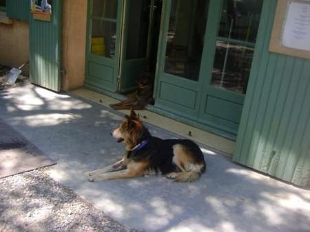 """Une pauvre chienne arrivée au refuge """"bouffée"""" par les asticots!!!! - Page 2 Victoi14"""