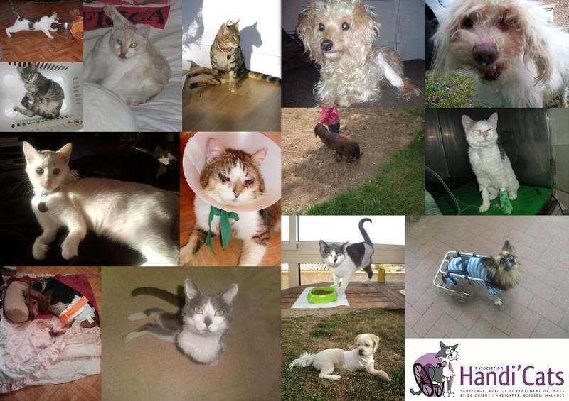 Association Handi'cats : Annonce type pour sites d'annonces gratuits   Asso10