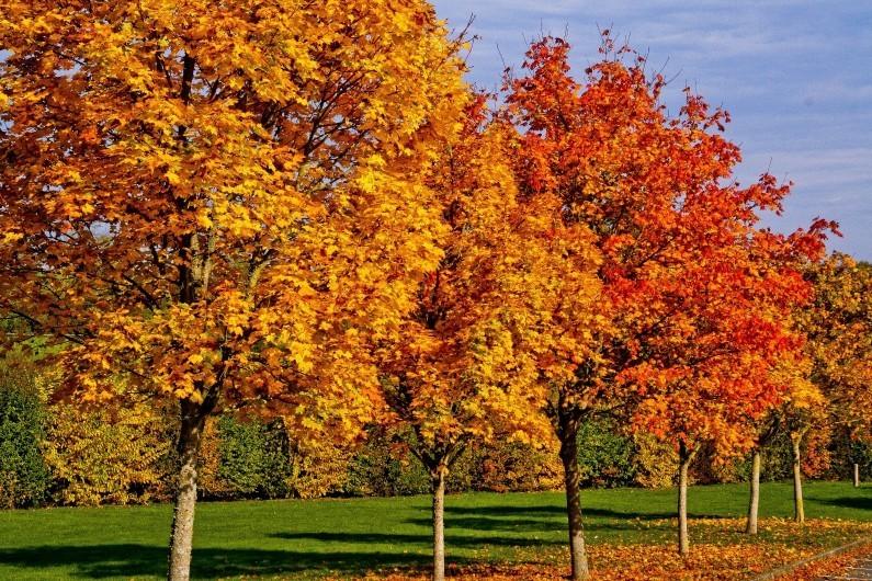 l'automne - Page 2 77849410