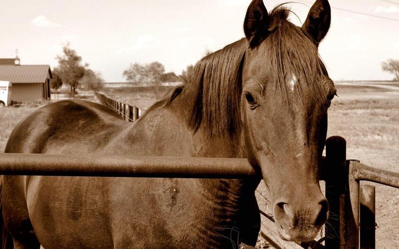 les chevaux  - Page 3 Beauti10