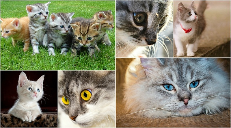 les chats - Page 2 Cats-110