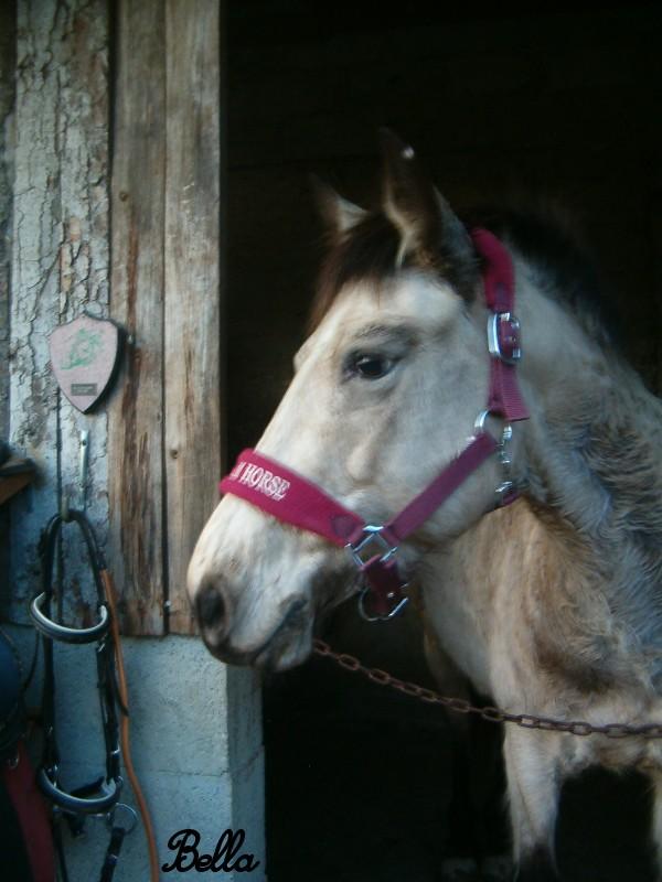 Propose de dessiner gratuitement vos chevaux !  - Page 2 Elle10