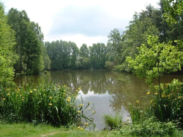 Beausoleil Lake for sale - Frenchcarpandcats.com Beau110