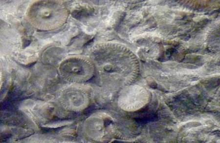 Russie . Découverte d' une machine vieille de 400 Millions d' années  Rusmac10