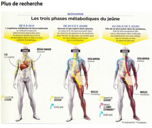 Le Jeûne thérapeutique détruit le cancer et régénère le corps – Prouvé scientifiquement Phases10