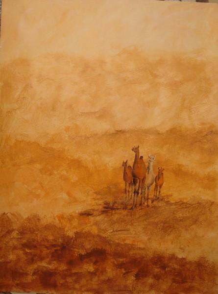 Paysages Desert10