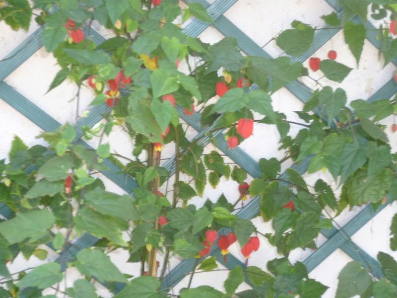 le jardin s'endort ... quoique P1080031