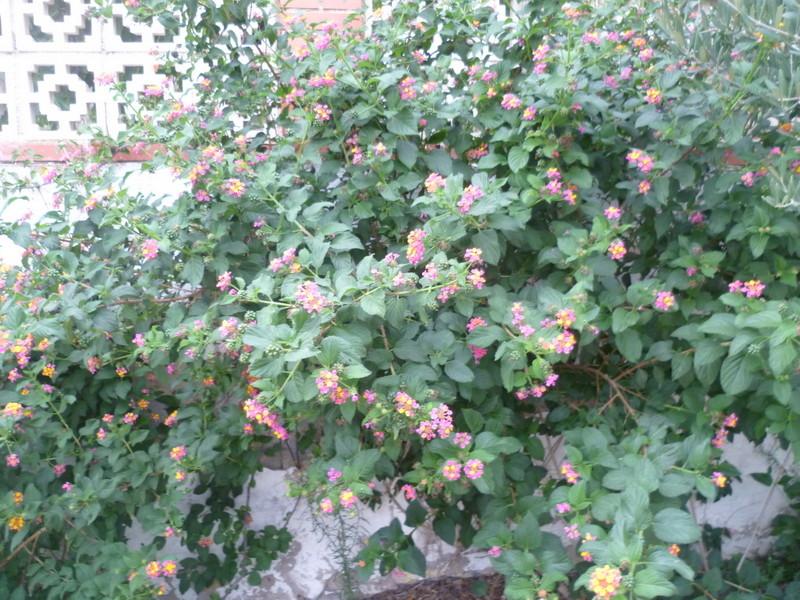 le jardin s'endort ... quoique P1080035