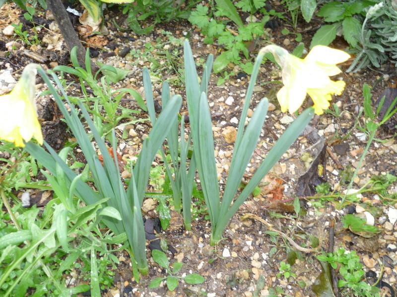 les voeux de mon jardin P1080241