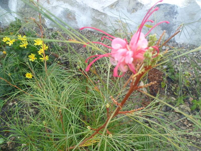 deux ou trois fleurs dans le vent P1080311
