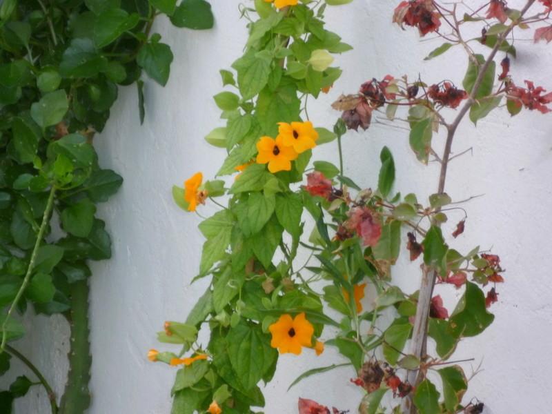 deux ou trois fleurs dans le vent P1080313