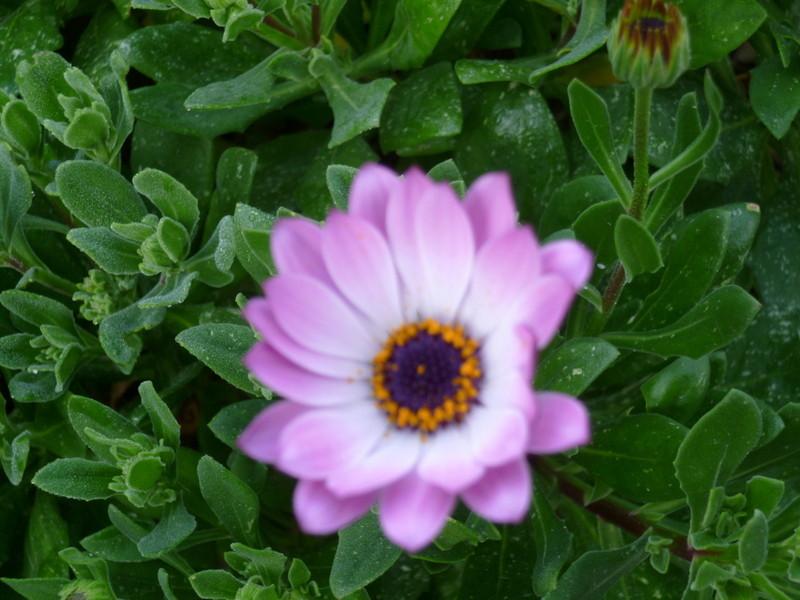 deux ou trois fleurs dans le vent P1080314