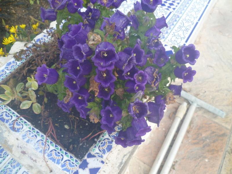 deux ou trois fleurs dans le vent P1080315