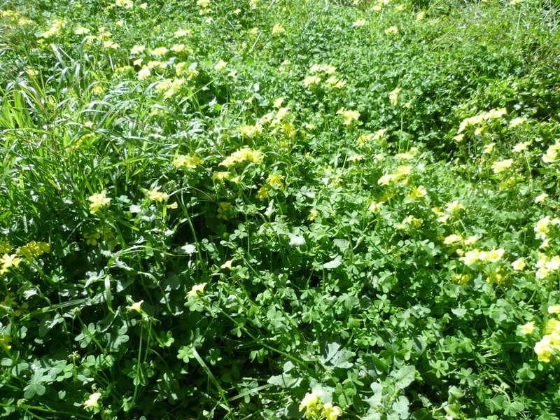 deux ou trois fleurs dans le vent - Page 2 P1080323