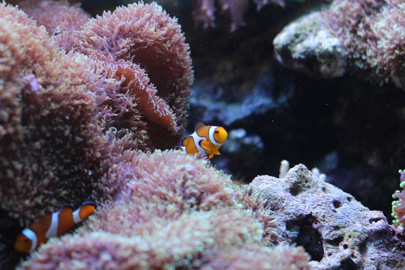 Nom de coraux Img_2710