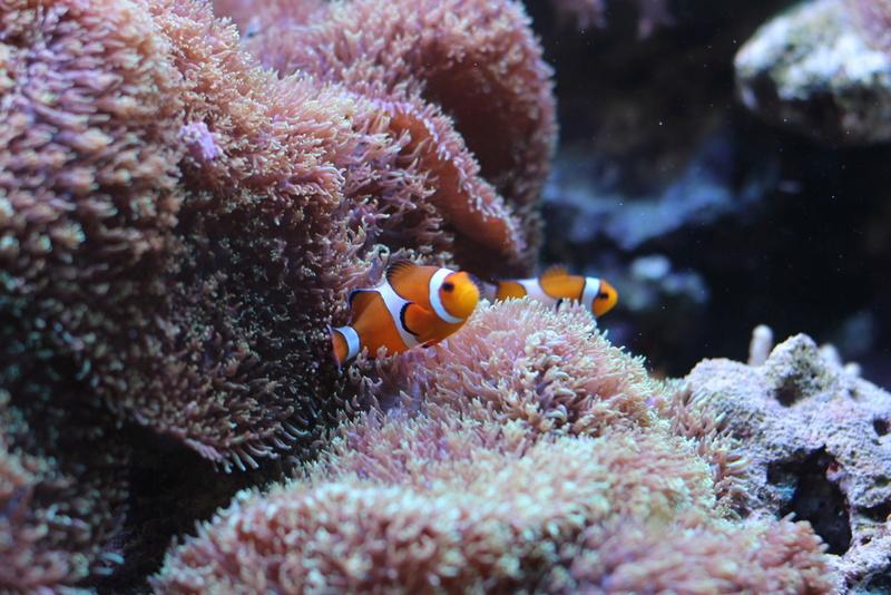 Nom de coraux Img_2712