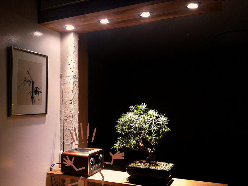Indoor Bonsai under LED lights. - Page 17 25661910