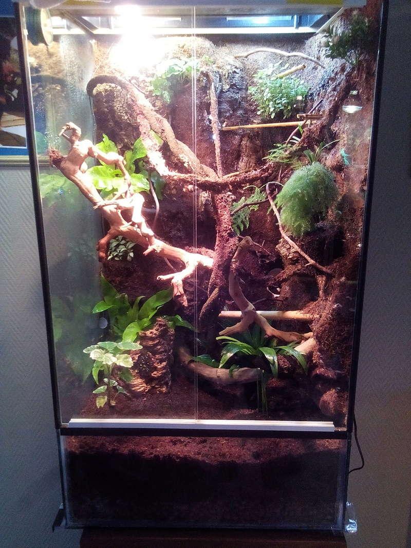 nouveau terra pour futur gecko Img_2012
