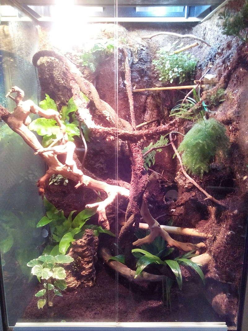 nouveau terra pour futur gecko Img_2013