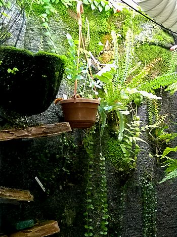 Un mur végétal dans ma serre salon - Page 2 Serre_13