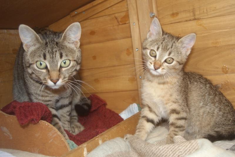 adoptée  Thelma chatte tigrée et sa chatonne 04/06 Chaton20