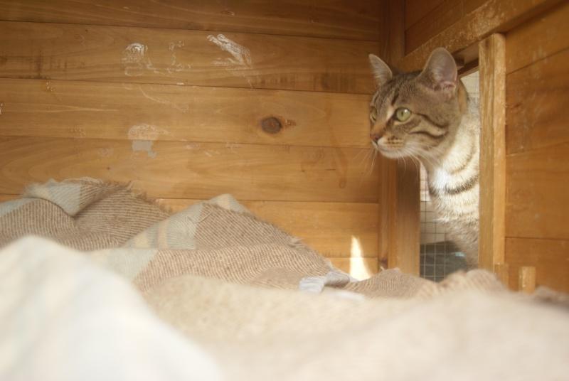 adoptée  Thelma chatte tigrée et sa chatonne 04/06 Chaton34