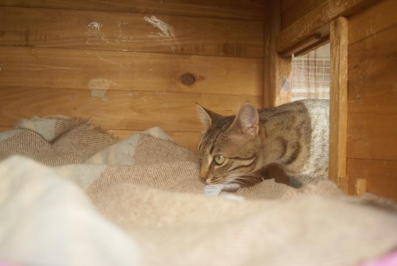 adoptée  Thelma chatte tigrée et sa chatonne 04/06 Chaton35