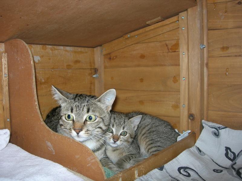 adoptée  Thelma chatte tigrée et sa chatonne 04/06 Minett10