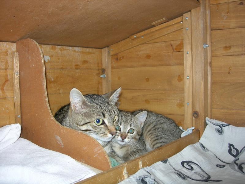 adoptée  Thelma chatte tigrée et sa chatonne 04/06 Minett11