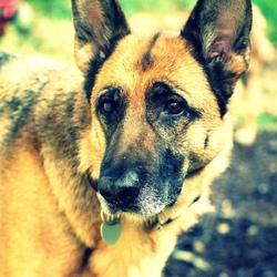 Un chien donne sa vie pour sauver tout un immeuble Chien-10
