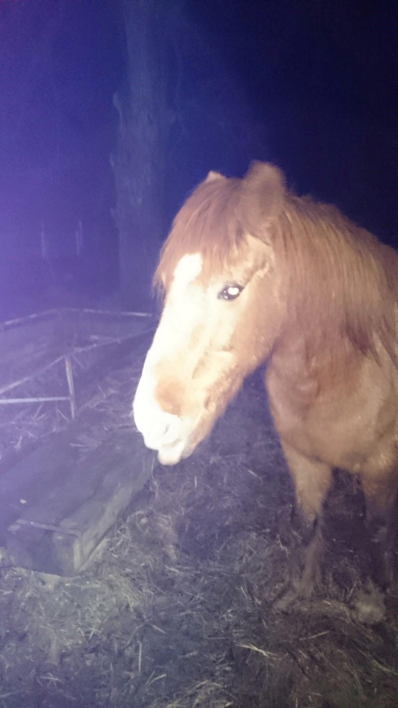 DOLLAR - OI type poney né en  1991 - adopté en juillet 2011 Dsc_0926