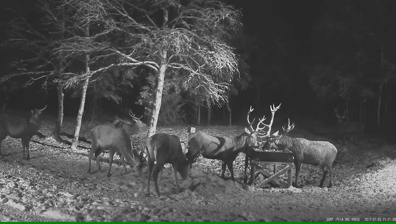 Red Deer Cam (Saarema Island)  - Page 31 Vlcsna28