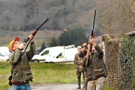 La guerre des pigeons est déclarée dans le village de Pau 28516210