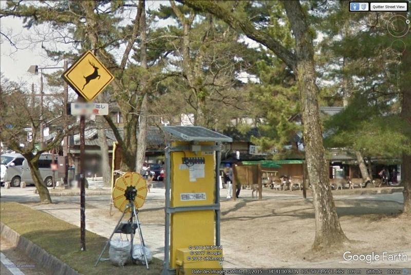 Daims Nara Japon Daims10