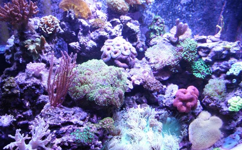 les 500 litres d'eau de mer d'angy et ced  - Page 2 Sam_5212