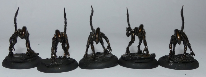 Alien Versus Predator : The Hunts Begins P1000014