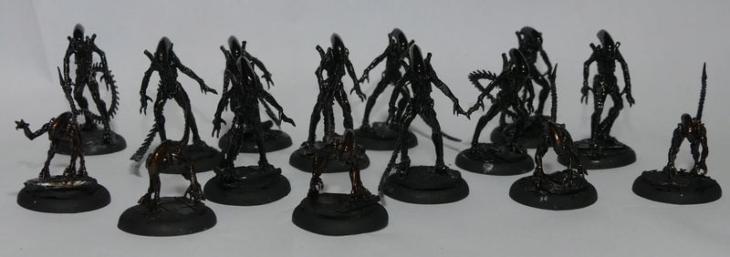 Alien Versus Predator : The Hunts Begins P1000015
