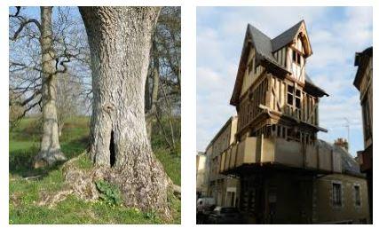 Juxtapositions oulipiennes d'images - Poésie des contrastes Bois10